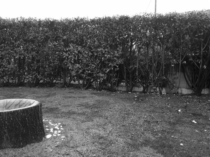 projet-rubi-avant-amenagement-mint-gardens