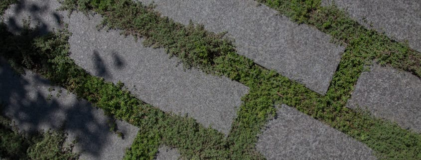 projet-rubi-mint-gardens-jardin-architecte-paysagiste-geneve