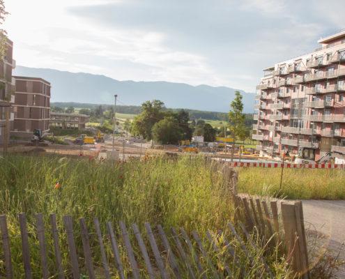 projet-vergers-espace-public-amenagement-mint-gardens